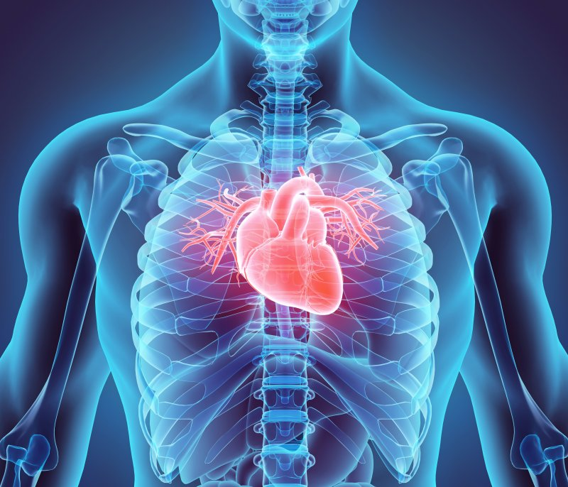 Illustration of heart in chest